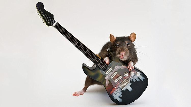 ребенок рожденный в год крысы под знаком дева
